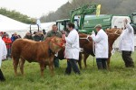 2012 North Somerset Show Livestock Cows