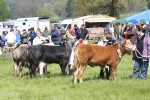 2012 North Somerset Show Livestock Judging