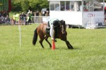2012 North Somerset Show Pony Club