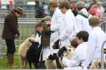 2012 North Somerset Show Sheep2